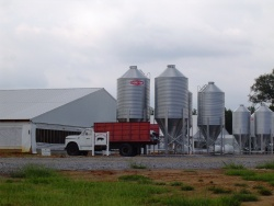 Farmers appeal filed in hog farm case