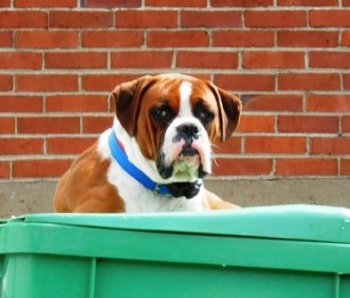 A Hound Dog Named Rufus, a Garbage can Painted Green and Fascism framing the flow of current events into history