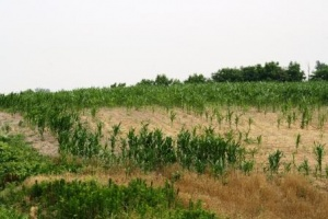 Intelligence Analysis: Western Kentucky 2012 Drought Damages