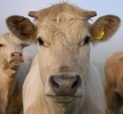 Kentucky Cattlemen's Association asks Dept. of Ag for $1 assessment