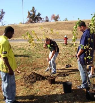 Students plant trees for Veterans Day