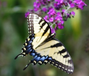Butterfly Wings and the Rhythms of Seasons