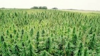 Kentucky Industrial Hemp Commission hears from Ag Commish Comer