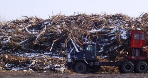 Trees: the Last Great Cost of the 2009 Ice Storm