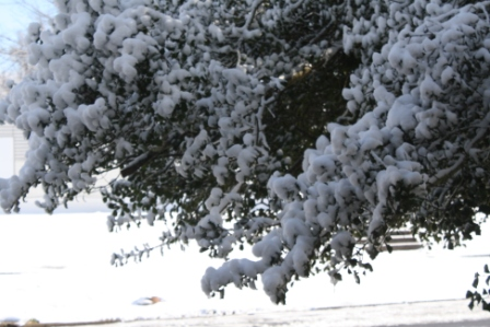 First snow of winter - just a dusting they said